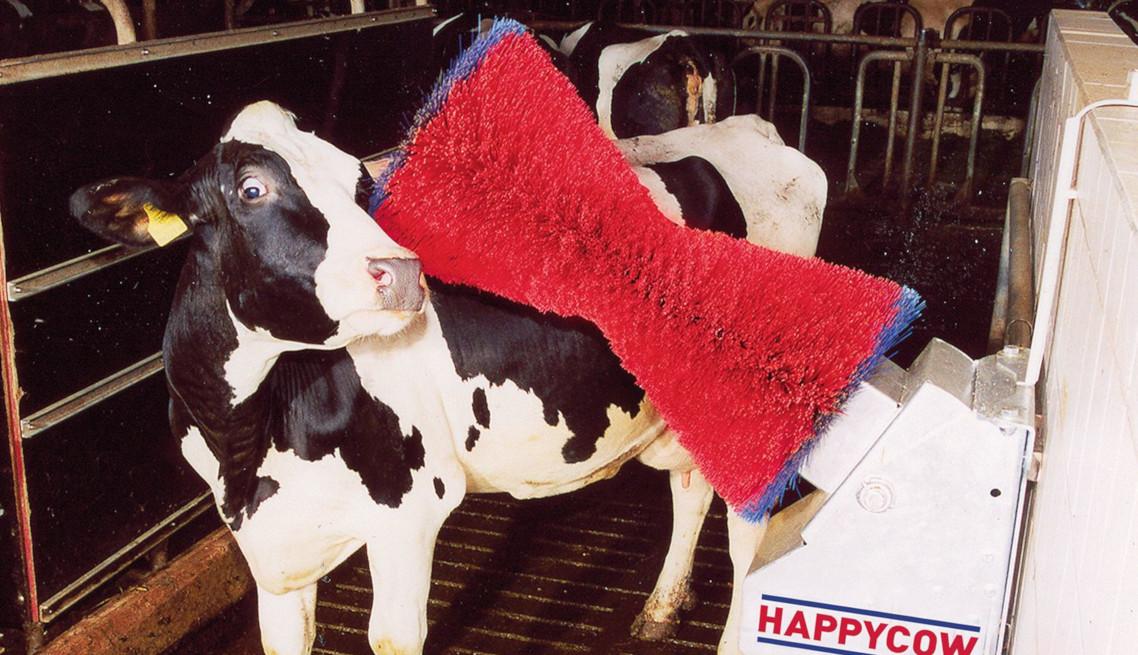 happy-cow-brush1